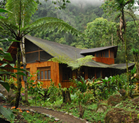 Mindo Garden, Cloudforest Lodge in Mindo - Ecuador