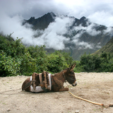 Donkey along the Inca Trail. Photo by Jussi Ruottinen