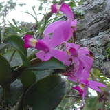 Orchids in their natural habitat