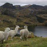 The Cajas Nationl Park. Photo by Will Gray