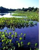 Pantanal Wetlands. Photo courtesy of Brasil Tourism Embratur.
