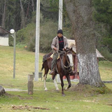 Horseback Riding in 