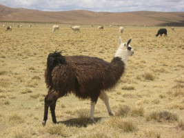 the rough guide to bolivia rough guides