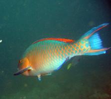 The gal pagos islands travel info and facts find out all for Parrot fish facts